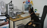 Sammy on Computer
