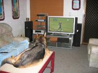 Sammy on TV